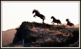 Tres Mustangs