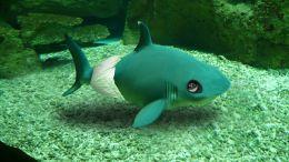 Baby Shark! (Doo doo da doo doo) Picture