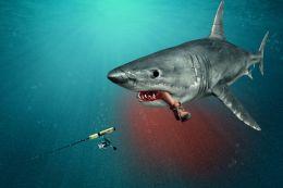 Unlucky Fisherman