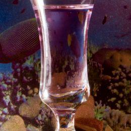 Liquorglassaquarium