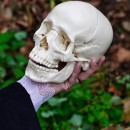 alas poor yorick photoshop contest