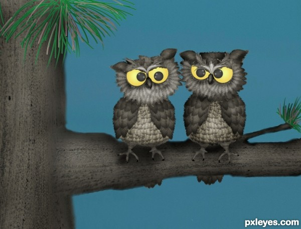 sandy beach owls