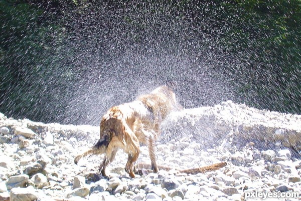 Doggy Shower