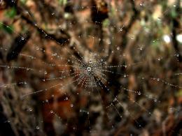 Wet Wet Web
