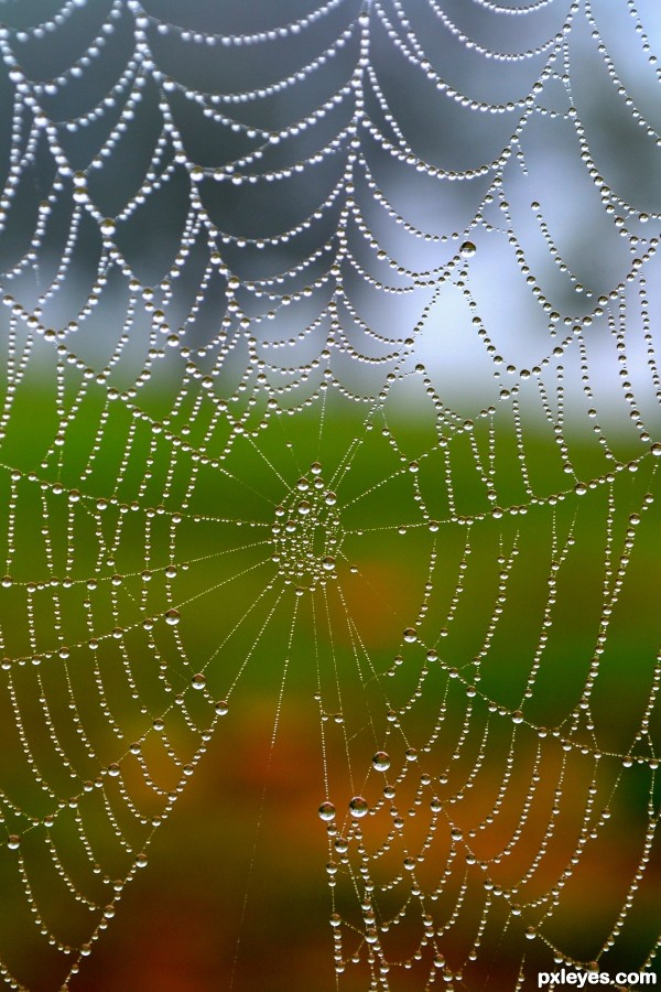 Early Morning Spider Web photoshop picture)
