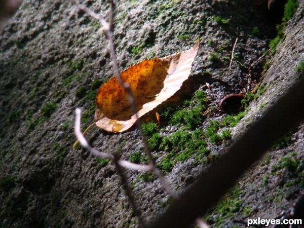 teardrop leaf
