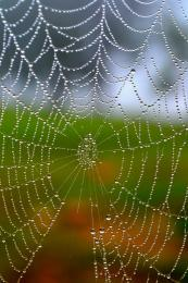 Early Morning Spider Web Picture