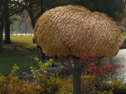 alpaca tree Picture