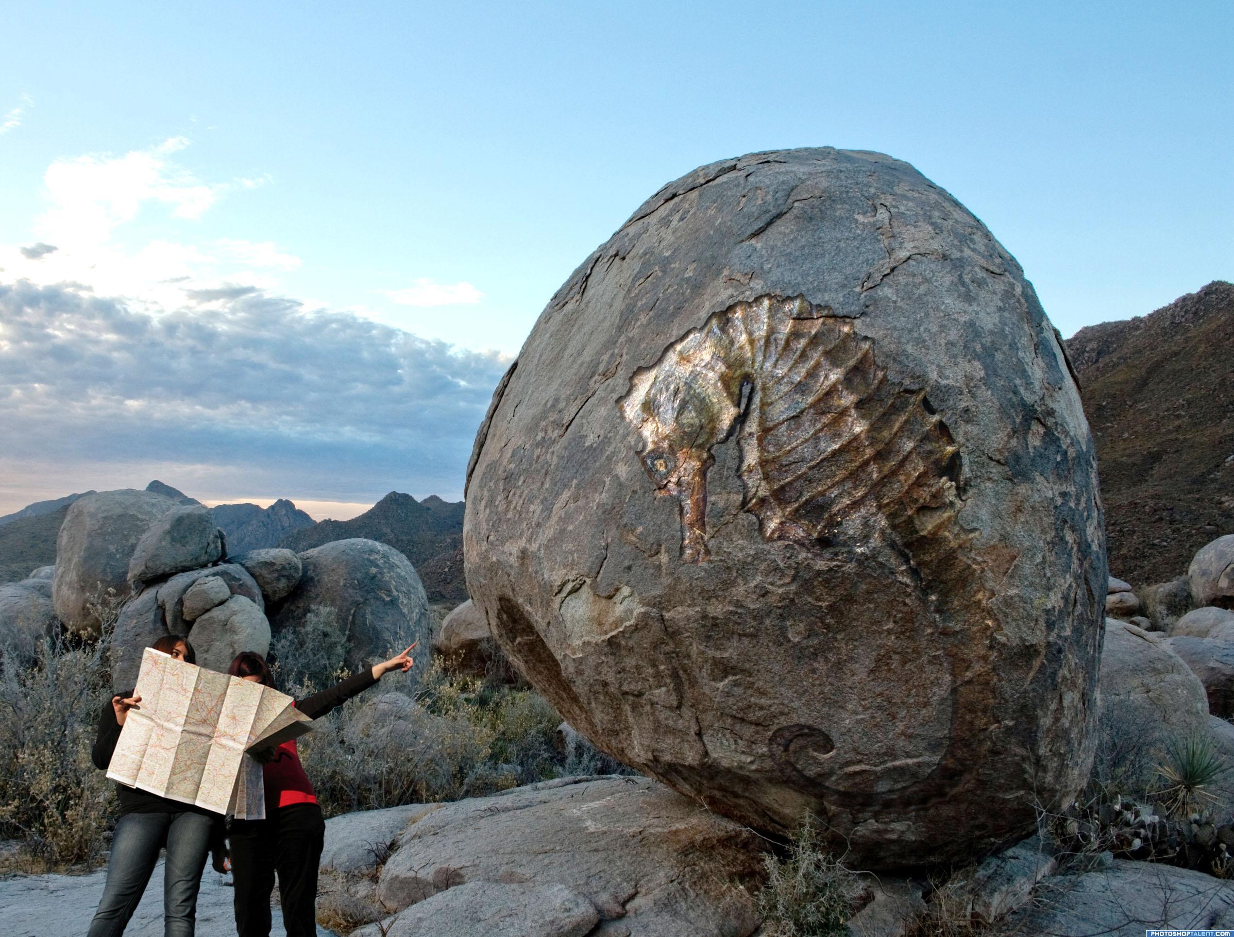 Amazing Fossils