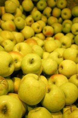 Lodi Apples