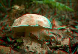 The mushroom Picture