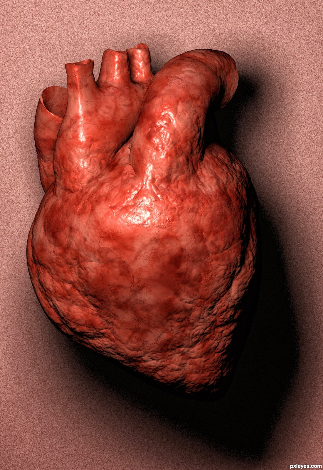 Real human heart images - photo#16