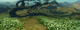 Elven Land