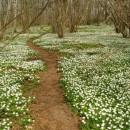 anemones path  photoshop contest
