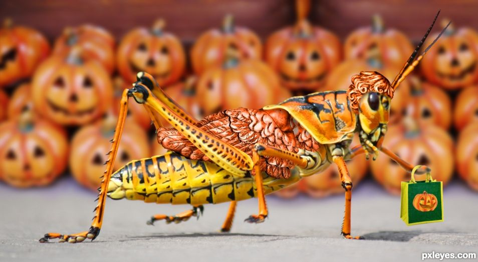 Trick or Treat Locust