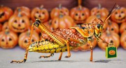 Trick or Treat Locust Picture