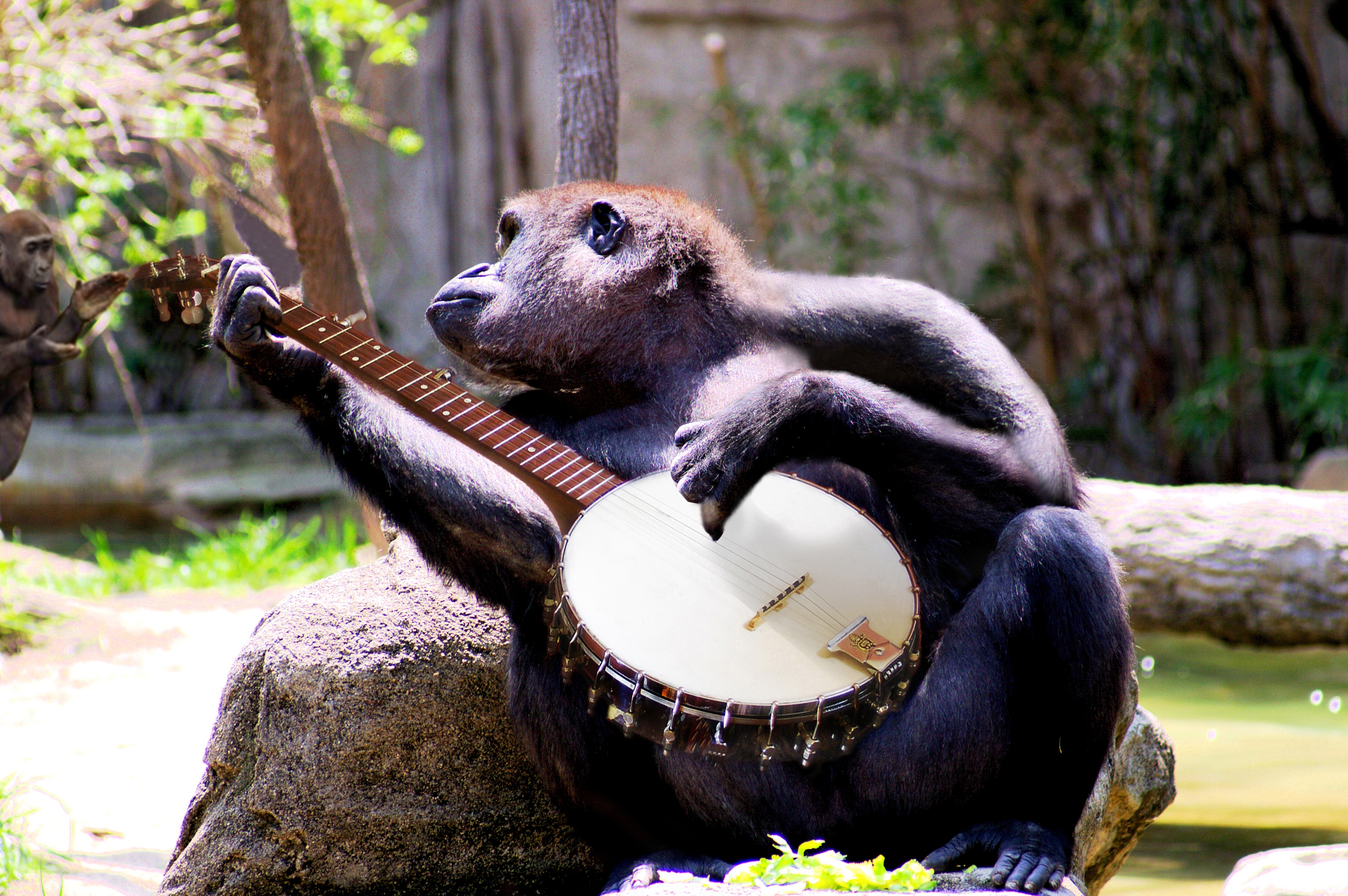 animals playing banjo - photo #10