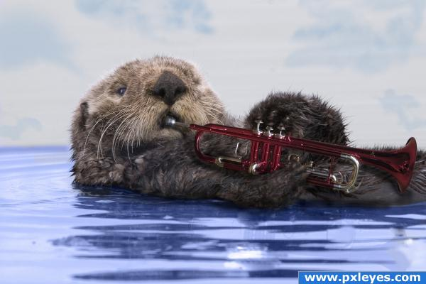 Blues Jazz Otter