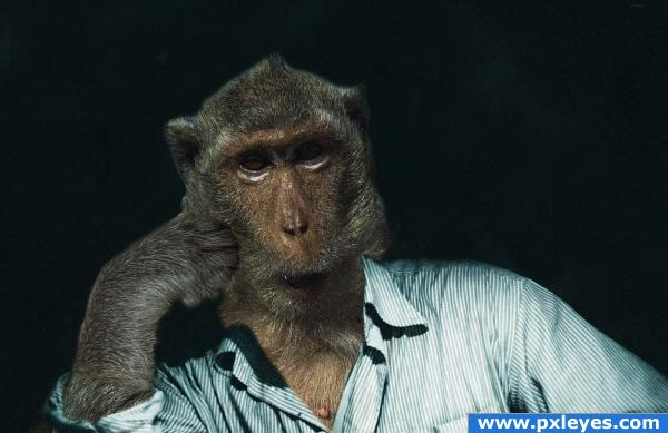 Funny Apes | Funny Monkey Portraits by Jill Greenberg - AmO Images ...