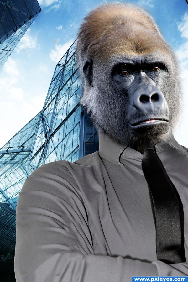 The business monkey