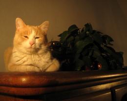 ProudPussycat