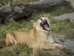 yawn!!!!!!!! im bored of this Picture