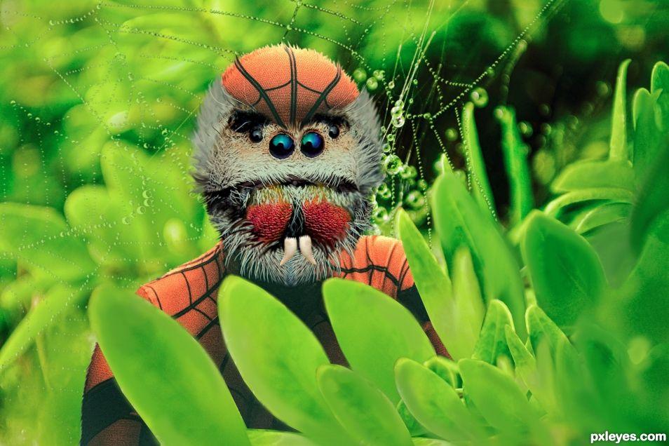 Spider-spider