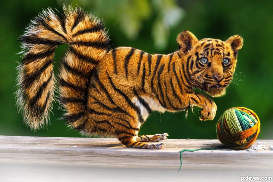 Tiger Squirrel