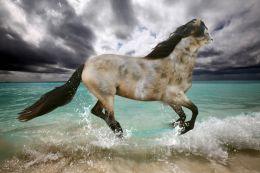 Cathorse