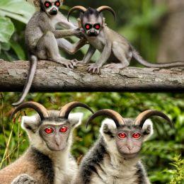 PrimateEvils