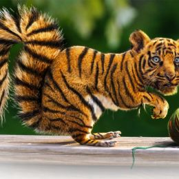 Tiger Squirrel Picture