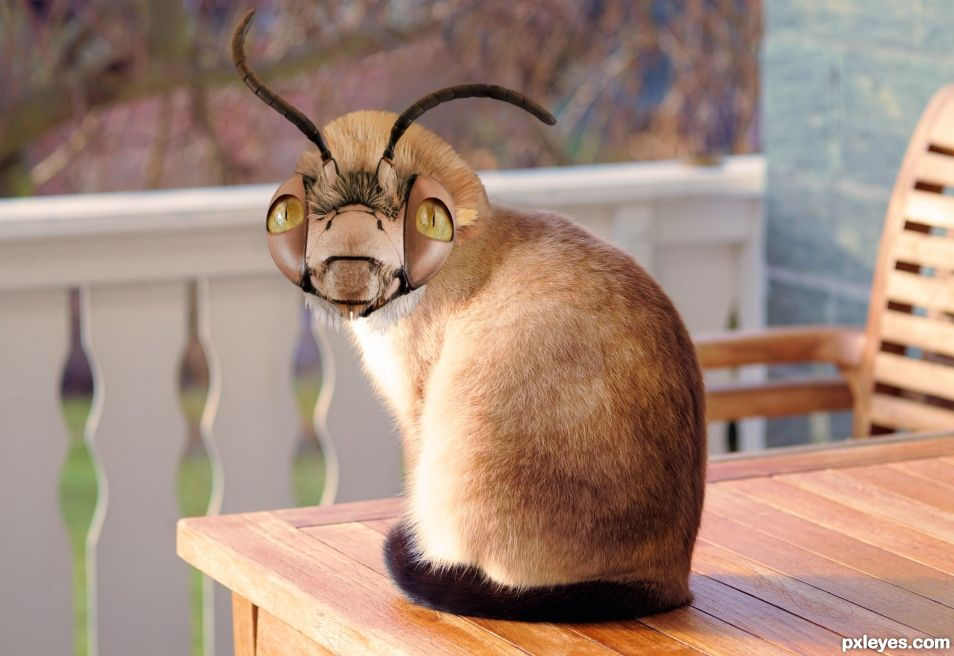 Siambug