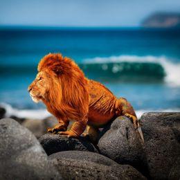 Lionard Picture