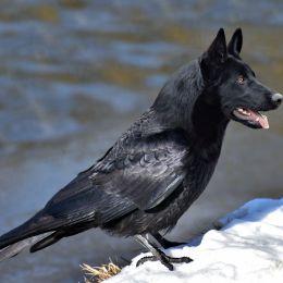 BlackDird