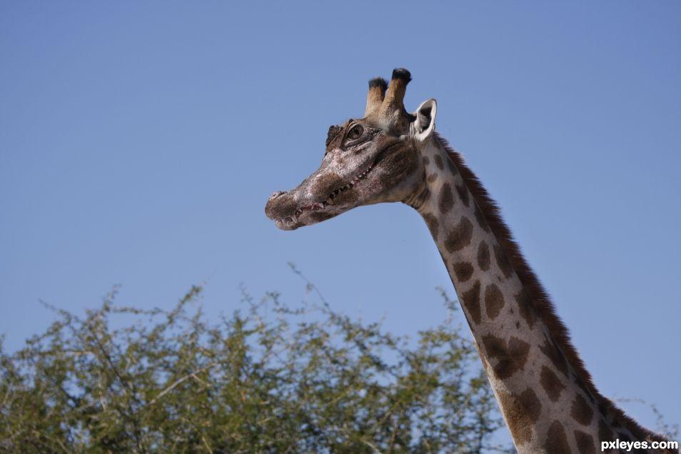 Gatoraffe or Girafator