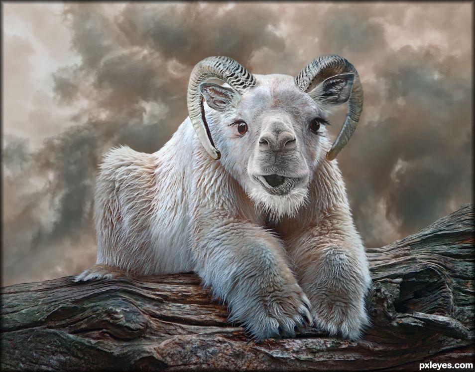 Camelnose Polarlope