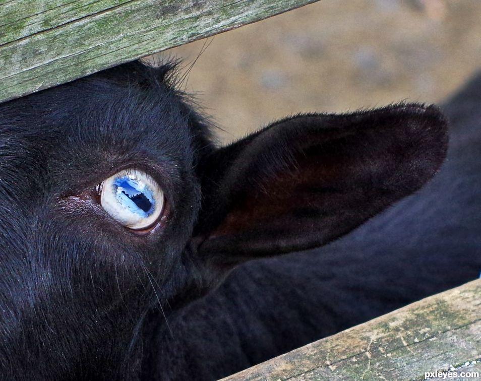 Eye Can Hear You