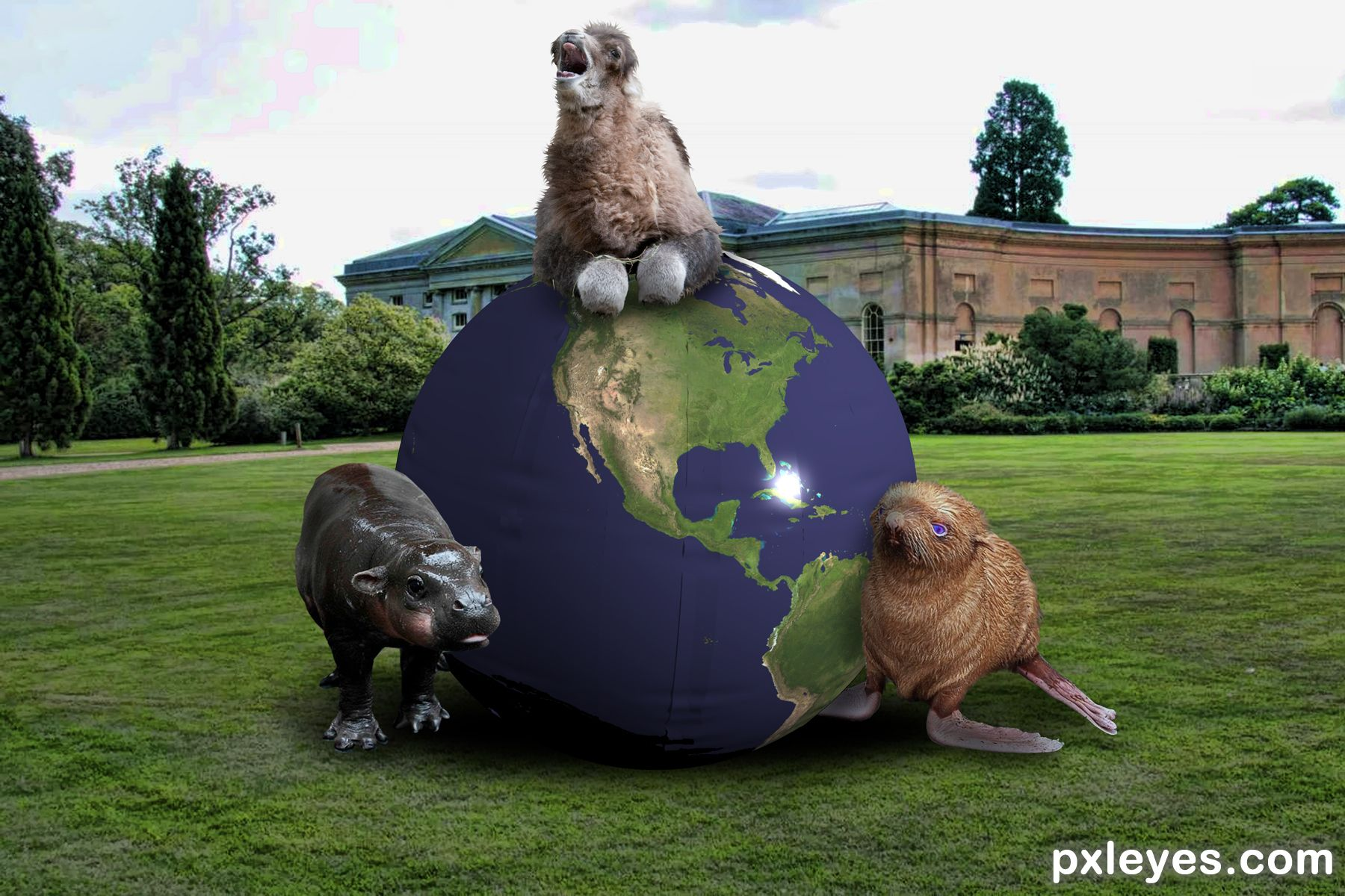 Animal Sports Day Photoshop Contest (21435), Pictures Page ...