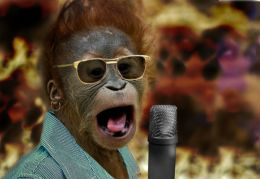 Underdog Orangutan Singer Wins Animals Have Talent 2