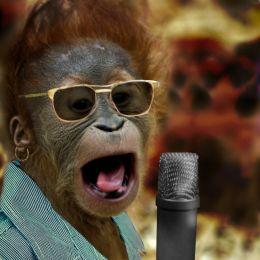 Underdog Orangutan Singer Wins Animals Have Talent 2 Picture