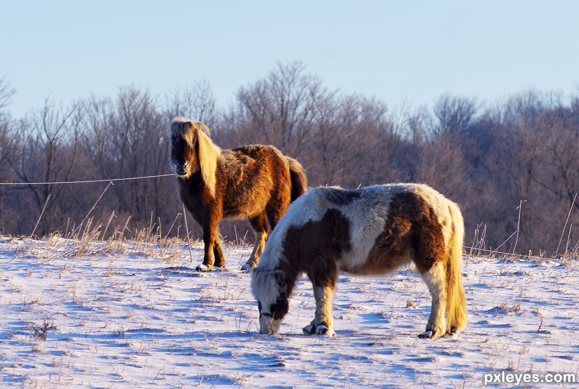 Winter Coats picture, by kyricom for: animals 2