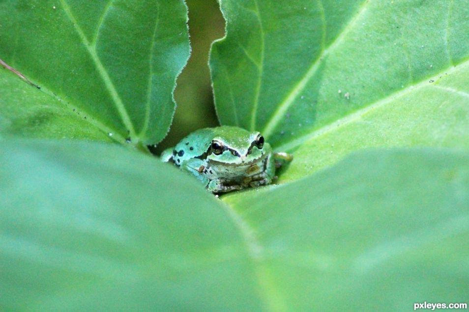 Frog Hideaway