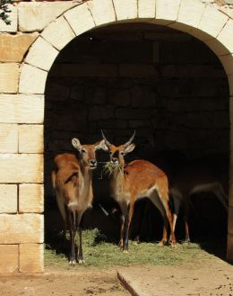 at teh animal park