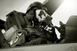Air Force Pilot  Picture