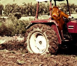 Cowworking