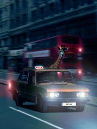 PizzaDeliveryGiraffe