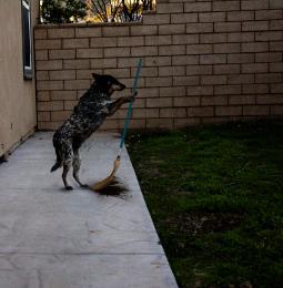 sweepingdog