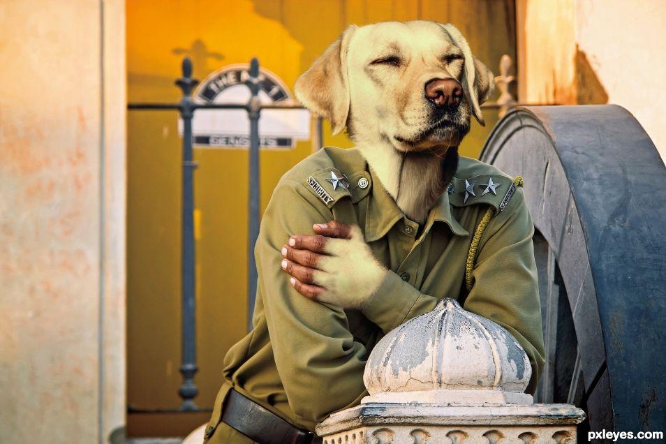 Guard Labrador