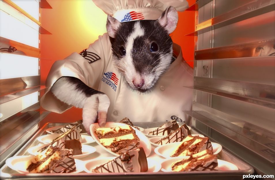 rat chef