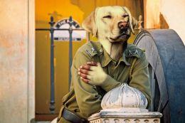 Guard Labrador Picture
